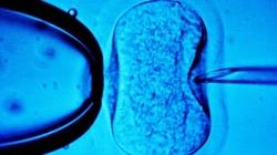 Terlikowski: In vitro jak gwałt. Trzeba szanować dzieci, potępiając metodę ich poczęcia - miniaturka
