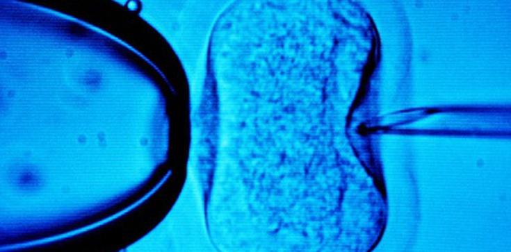 Kredyt na in vitro. Firmy zwęszyły nowy biznes - zdjęcie