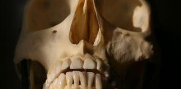 Śledztwo ws. The Human Body umorzone - zdjęcie