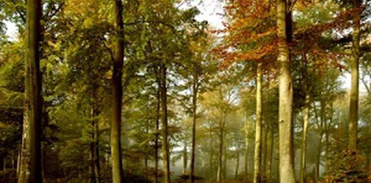 Lasy za kamienice - OK! Ale niemieckie lasy! - zdjęcie