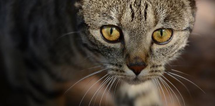 Dzieci posłuchają o kocie, który myślał, że jest psem i motylach, oczekujących na stworzenie przez Projektanta Rzeczy Wszelakich. MSZ dał 87 tys. zł na warsztaty gender - zdjęcie