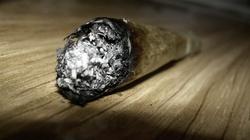 Oto dlaczego PiS nie legalizuje marihuany. Ten narkotyk niszczy mózg!!! - miniaturka
