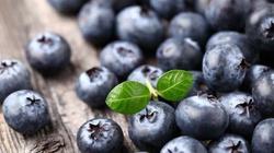Czarna jagoda - naturalny antybiotyk dla dzieci i dorosłych  - miniaturka