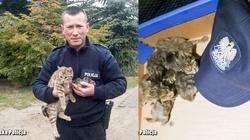 Małe kotki owinięto folią i wyrzucono na śmietnik. To, co zrobił policjant chwyta za serce! - miniaturka