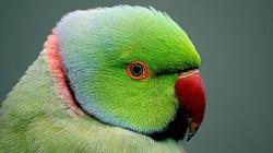 Nowy gatunek ptaka zamieszkał w Polsce - miniaturka