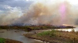 Czy Amazonia to płuca ziemi? Oto obalenie mitu!!! - miniaturka