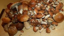 Tak pasteryzuj grzyby... a potem jedz je ze śmietaną!!! - miniaturka