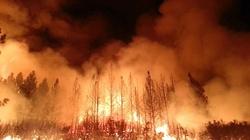 Australia: Setki podpalaczy podkładają ogień pod busz - miniaturka