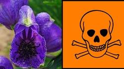 Uważaj - śmiertelnie trujące rośliny rosną w Polsce - miniaturka