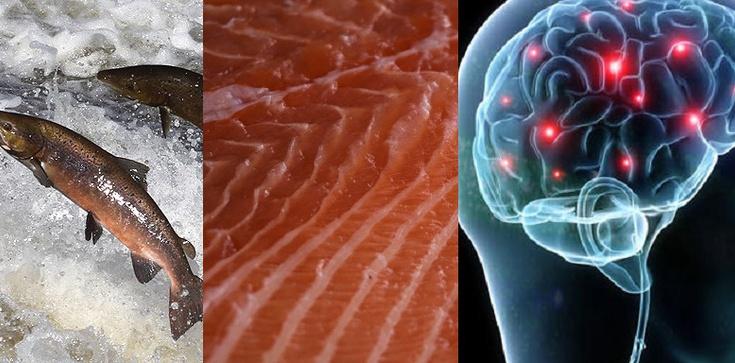 W zdrowej rybie zdrowy tłuszcz - zbuduje twój mózg - zdjęcie