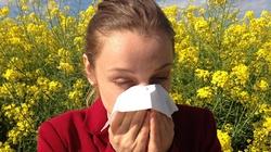 Jesteś alergikiem? Korzystaj z pogody, bo... - miniaturka
