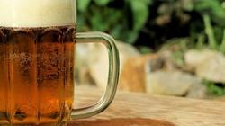 UWAGA! Śmiercionośny roundup znajduje się w piwie. Nawet ekologicznym! - miniaturka