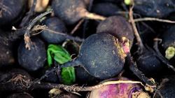 Czarna rzepa -zdrowie przez całą zimę - miniaturka
