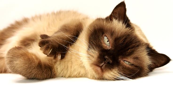 Obcinanie pazurków kotom jest ,,nieludzkie'', a zabijanie dzieci jest ok. Absurd w Nowym Jorku - zdjęcie