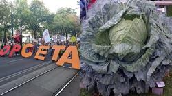 Parlament Europejski ratyfikował CETA - miniaturka