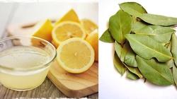 Cytryna i liść laurowy oczyści twoje kości i stawy - miniaturka