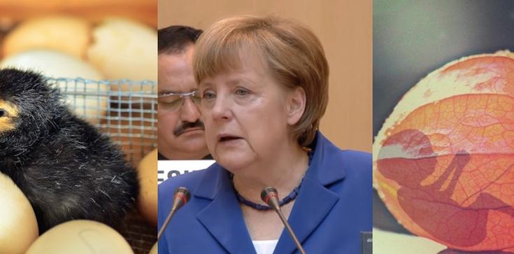 Niemcy – kraj absurdu. Aborcja jest legalna. Władze wprowadzają za to… zakaz zabijania kurzych embrionów  - zdjęcie