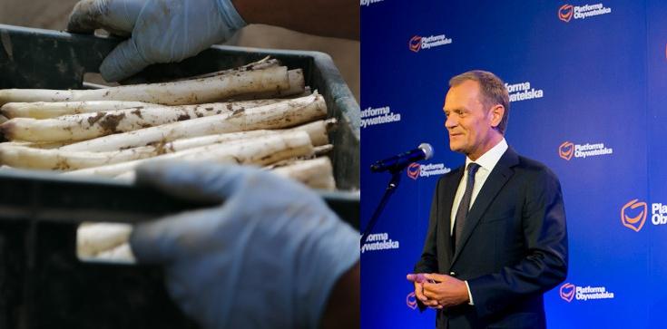 Niemiecka farma szparagów - ze strażnikami! Tak rolę Polaków w UE widział Donald Tusk - zdjęcie