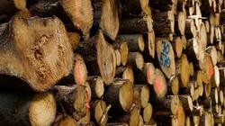 Od teraz nowe zasady wycinki drzew, ZOBACZ - miniaturka