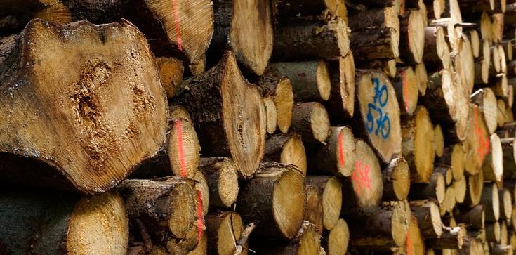 Od teraz nowe zasady wycinki drzew, ZOBACZ - zdjęcie