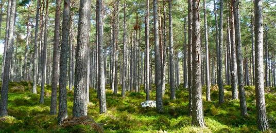 UE zakaże korzystania z polskich lasów? - miniaturka
