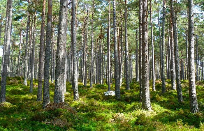 UE zakaże korzystania z polskich lasów? - zdjęcie
