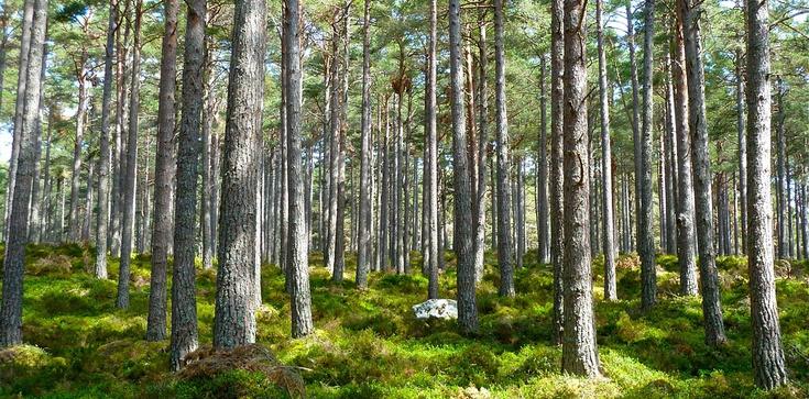 W Polsce sadzi się więcej drzew, niż wycina - zdjęcie