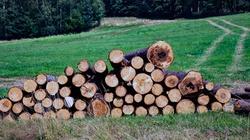 Wycinka drzew już nie taka łatwa. Sejm zdecydował - miniaturka