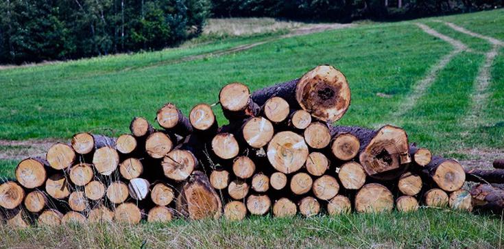 Wycinka drzew już nie taka łatwa. Sejm zdecydował - zdjęcie