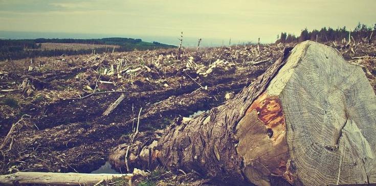 W Niemczech wycięto 30 tys. drzew! Świat milczy! Im wolno, a Polsce nie? - zdjęcie