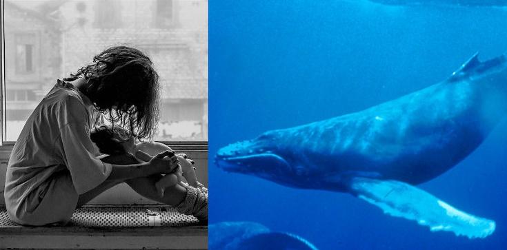 Meksykański biskup potępił 'Niebieskiego wieloryba' - zdjęcie