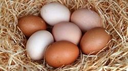Cała PRAWDA o jajkach - pół wieku zakłamania - miniaturka