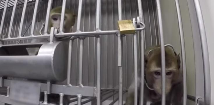 Niemiecki humanitaryzm? Tak cierpiały laboratoryjne zwierzęta! - zdjęcie