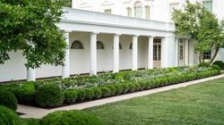 W Ogrodzie Białego Domu znalazła się róża imienia Jana Pawła II - miniaturka