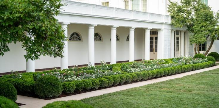 W Ogrodzie Białego Domu znalazła się róża imienia Jana Pawła II - zdjęcie