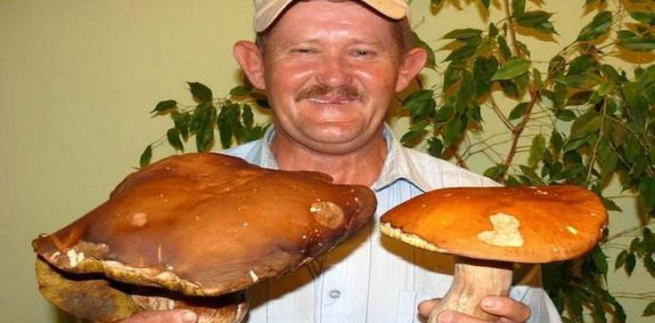 Grzyby to leśne mięso - zdrowe i dietetyczne  - zdjęcie