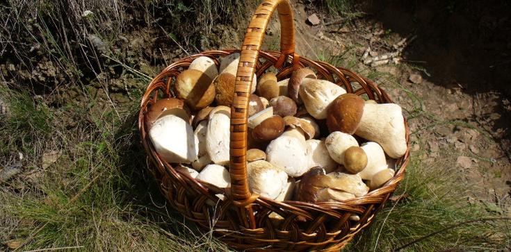 Grzyby to leśne mięso: 1 kg grzybów to pół kilo mięsa - zdjęcie