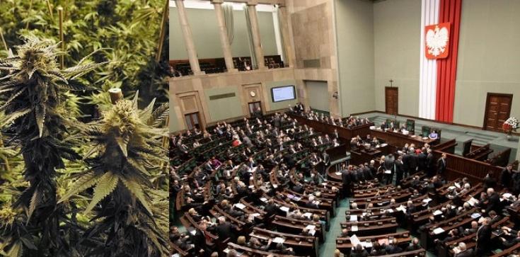 Matka Kurka dla Fronda: Lecznicza marihuana, czyli cud zjednoczonej Polski - zdjęcie