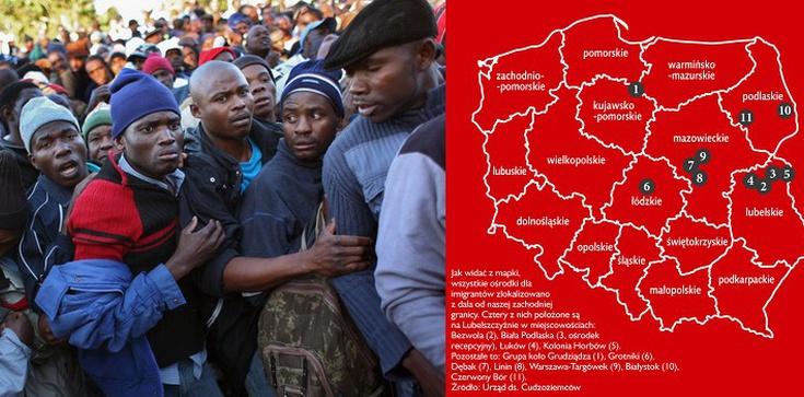 Demaskujemy przedwyborcze kłamstwa rządu ws imigrantów! - zdjęcie