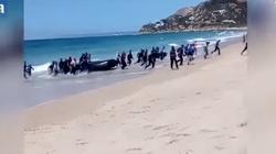 Gangi przemycają imigrantów na jachtach - miniaturka