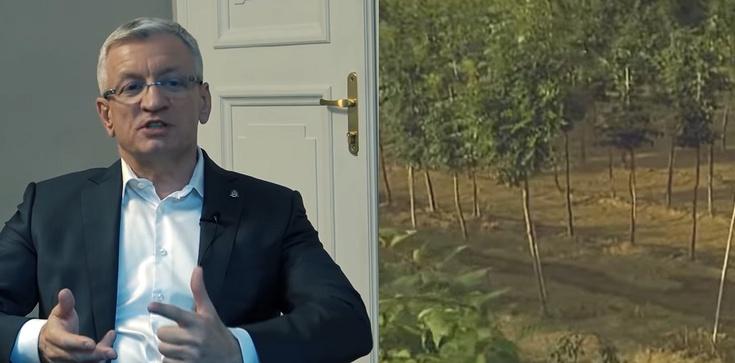 14 drzew za ponad 500 tys. złotych. Tak ,,gospodaruje'' Poznań - zdjęcie