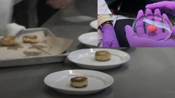 Kurczak z bioreaktora. Ruszyła produkcja sztucznego mięsa - miniaturka