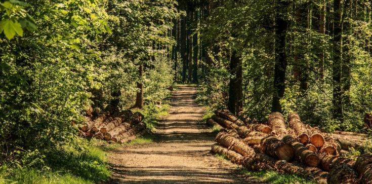 Zakaz wstępu do lasu zostanie zniesiony. Są jednak wyjątki... - zdjęcie