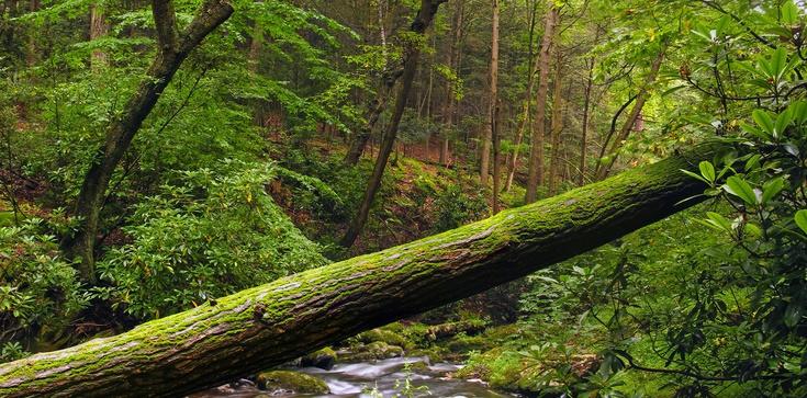 Skandal!!! Ekolewusy przykuci do drzew, a leśniczy ich ,,olał''' - zdjęcie