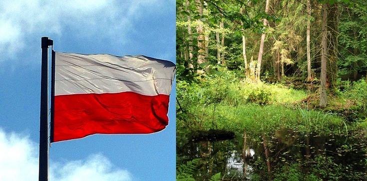 Polskie Lasy - wzór zdrowia i rozwoju! - zdjęcie