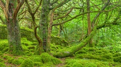 Kornik niszczy drzewa. Zagrożony 1 mln hektarów lasów - miniaturka