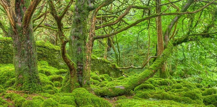 Kornik niszczy drzewa. Zagrożony 1 mln hektarów lasów - zdjęcie