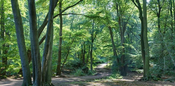 Koniec z wnioskami ws wycinki drzew? - zdjęcie