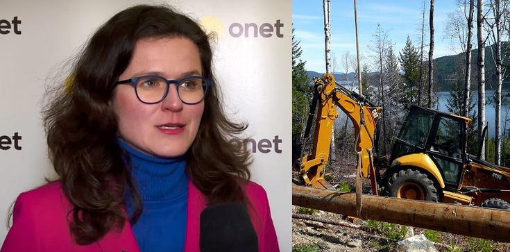 Gdańsk chce wycinać setki drzew nad morzem? Aktywiści alarmują - zdjęcie