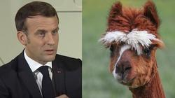 Francja. Zwierzęta bardziej chronione niż ludzie? Czy zostanie powołany rzecznik praw zwierząt? - miniaturka